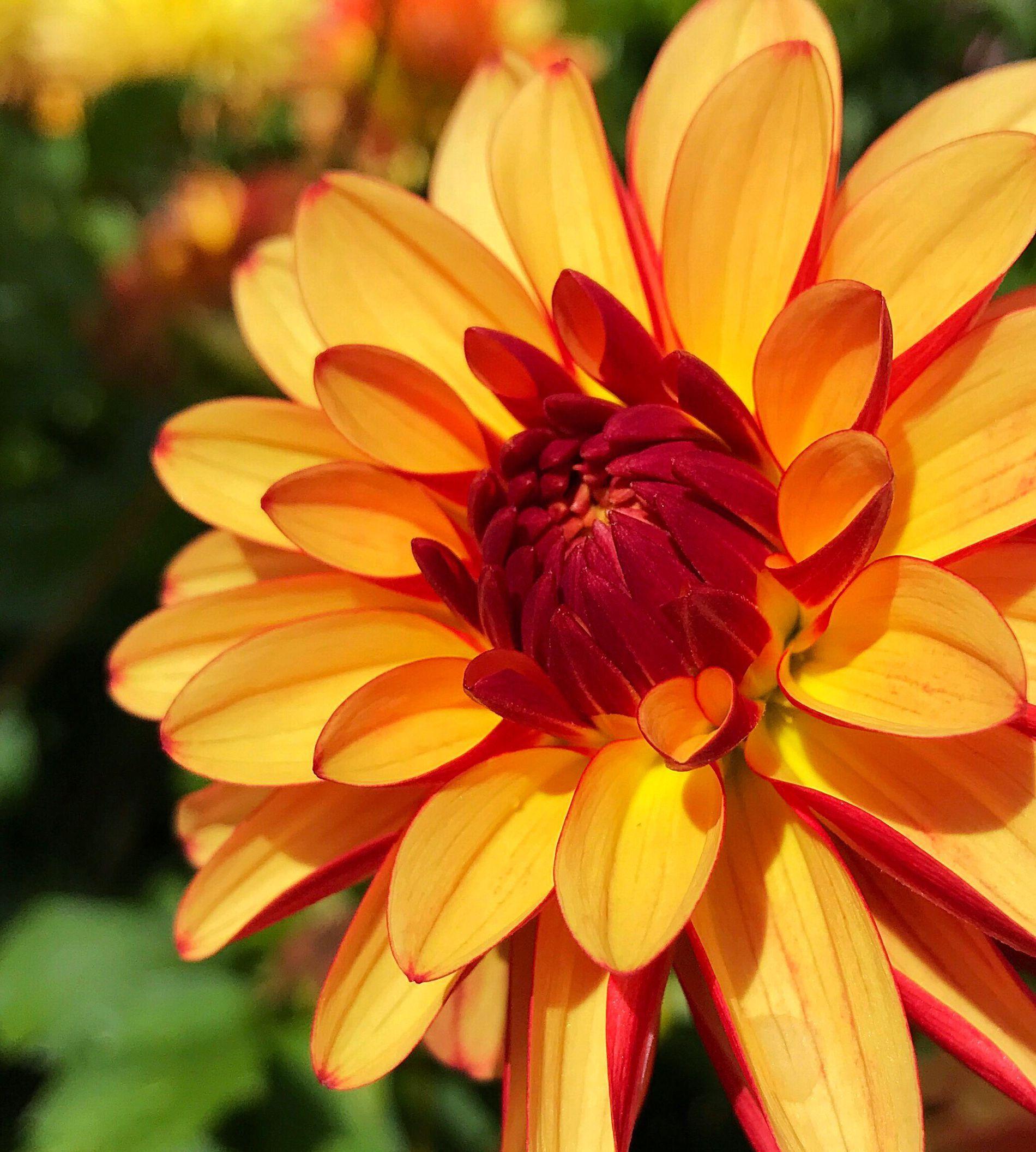 Mens Soft Breathable Watercolor Floral Flower Plants Underwear Boxer Briefs