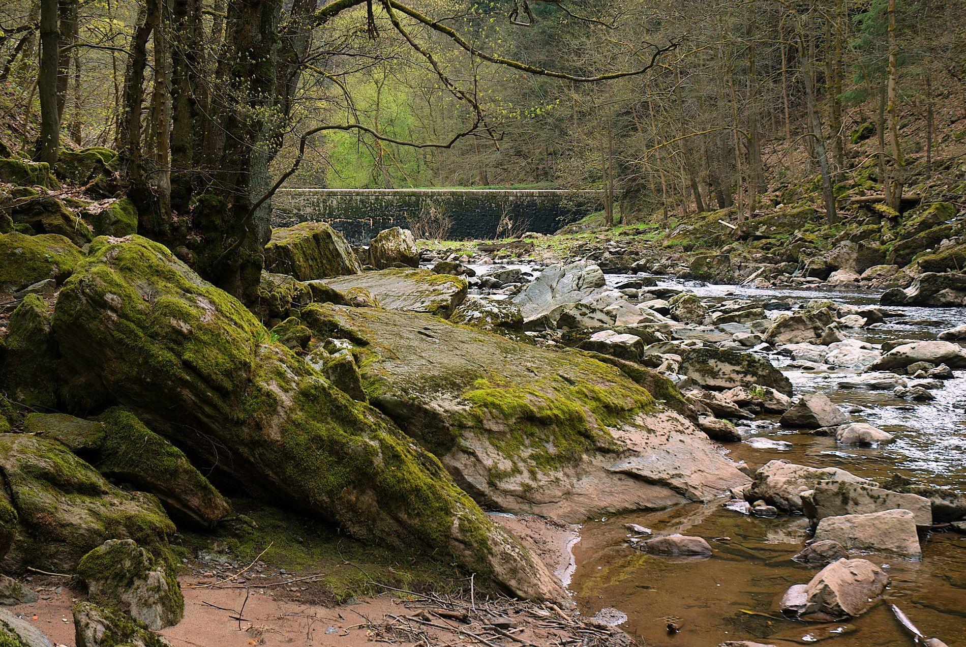 schatzsucher von oak island stream