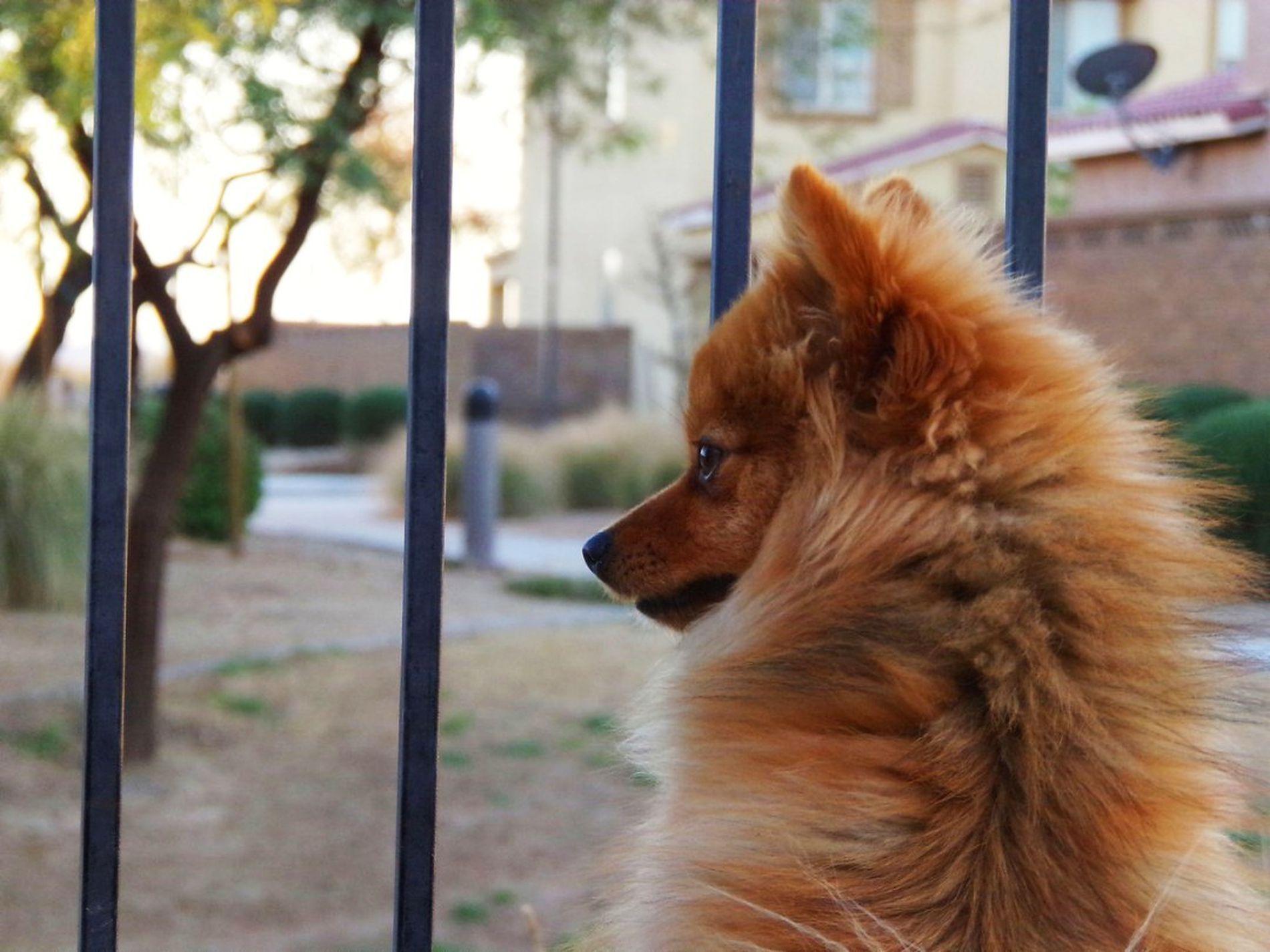 Rikki Knight German Sheperd Dog Silhouette By Moon Design Compact Mirror