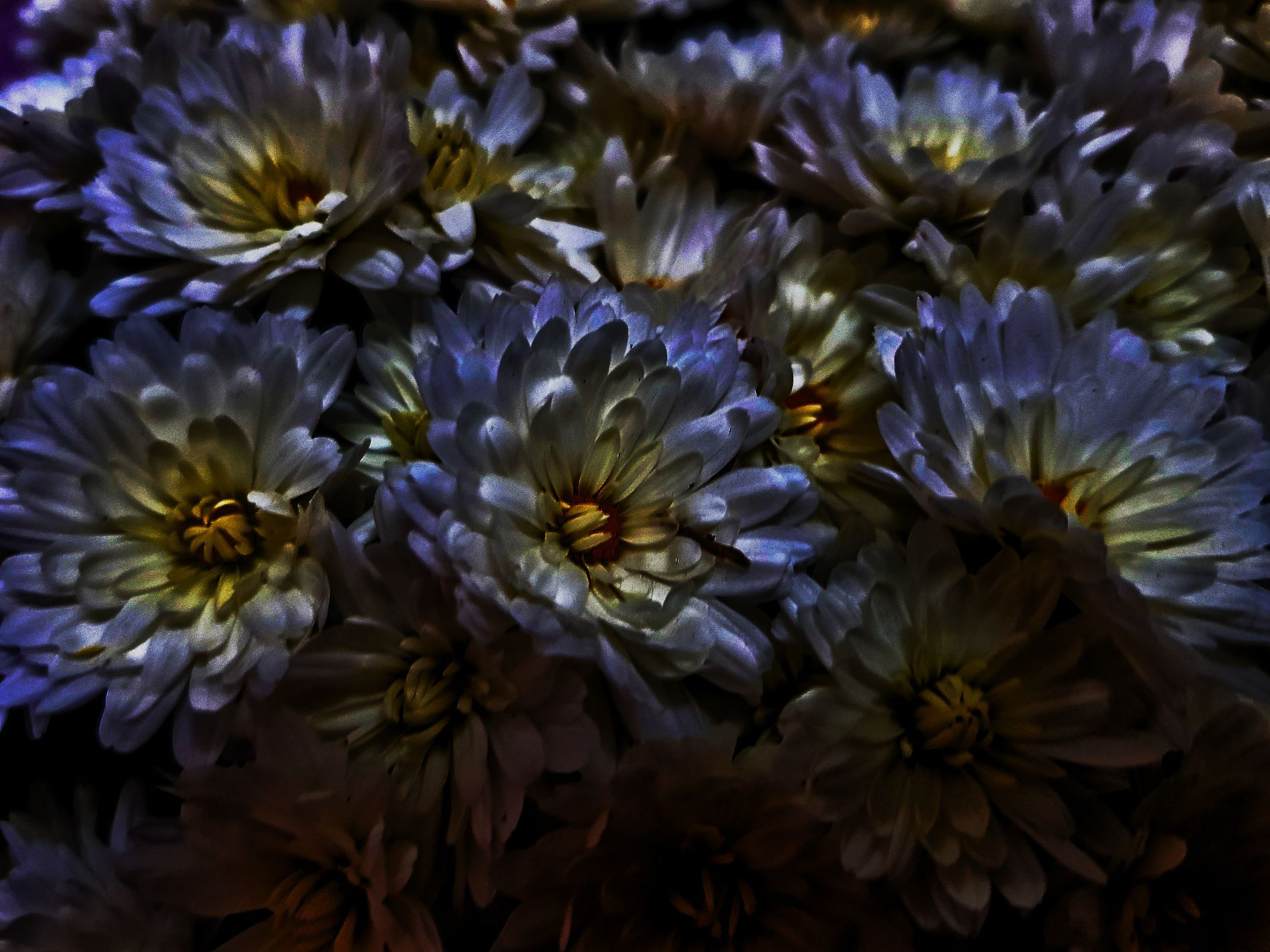 6 x 6 Rikki Knight Purple Dahlia Autumn Flower Design Ceramic Art Tile