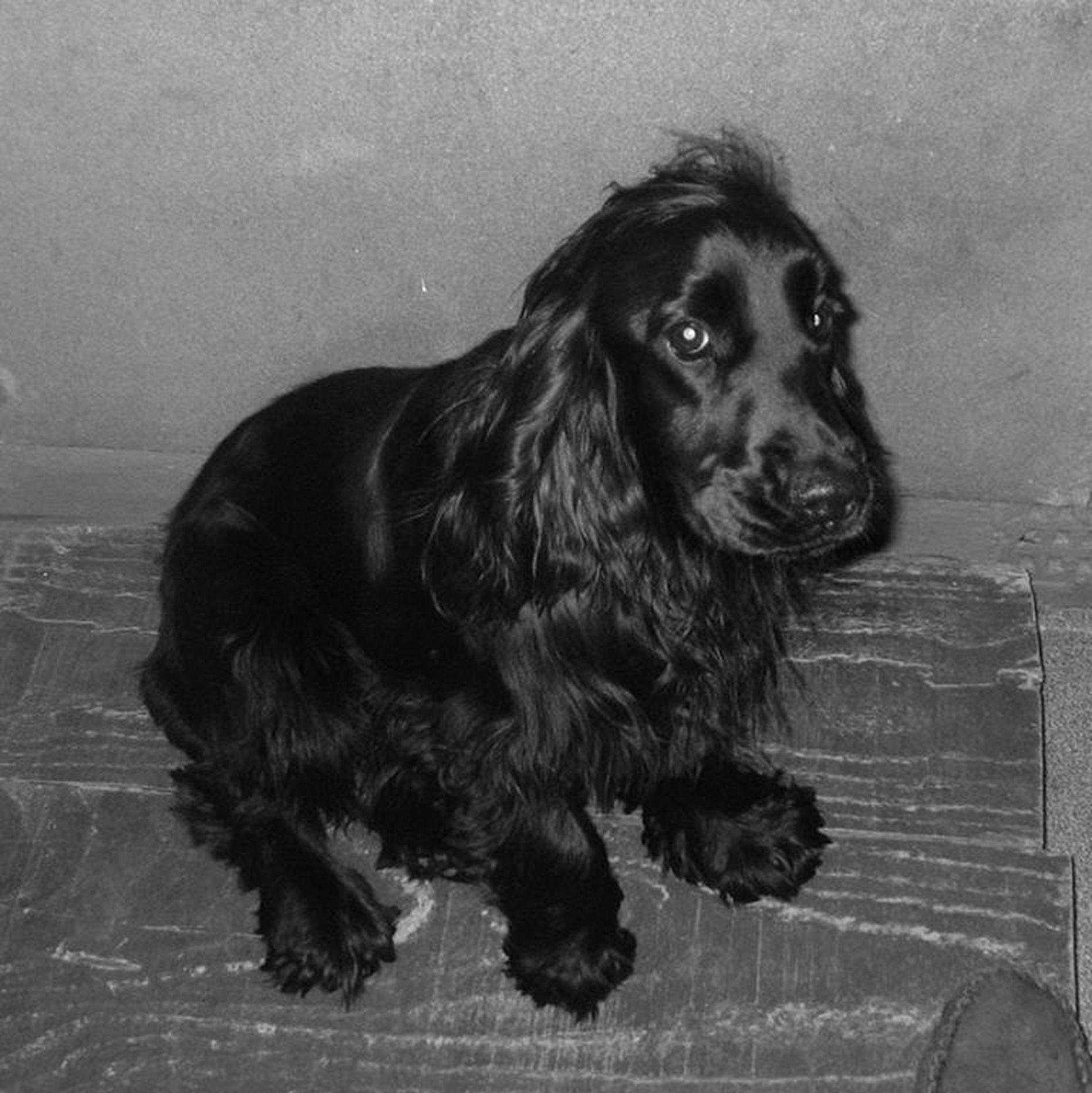 13-ON Heavy Duty Mesh Headrest Pet Dog Guard For PEUGEOT 2008