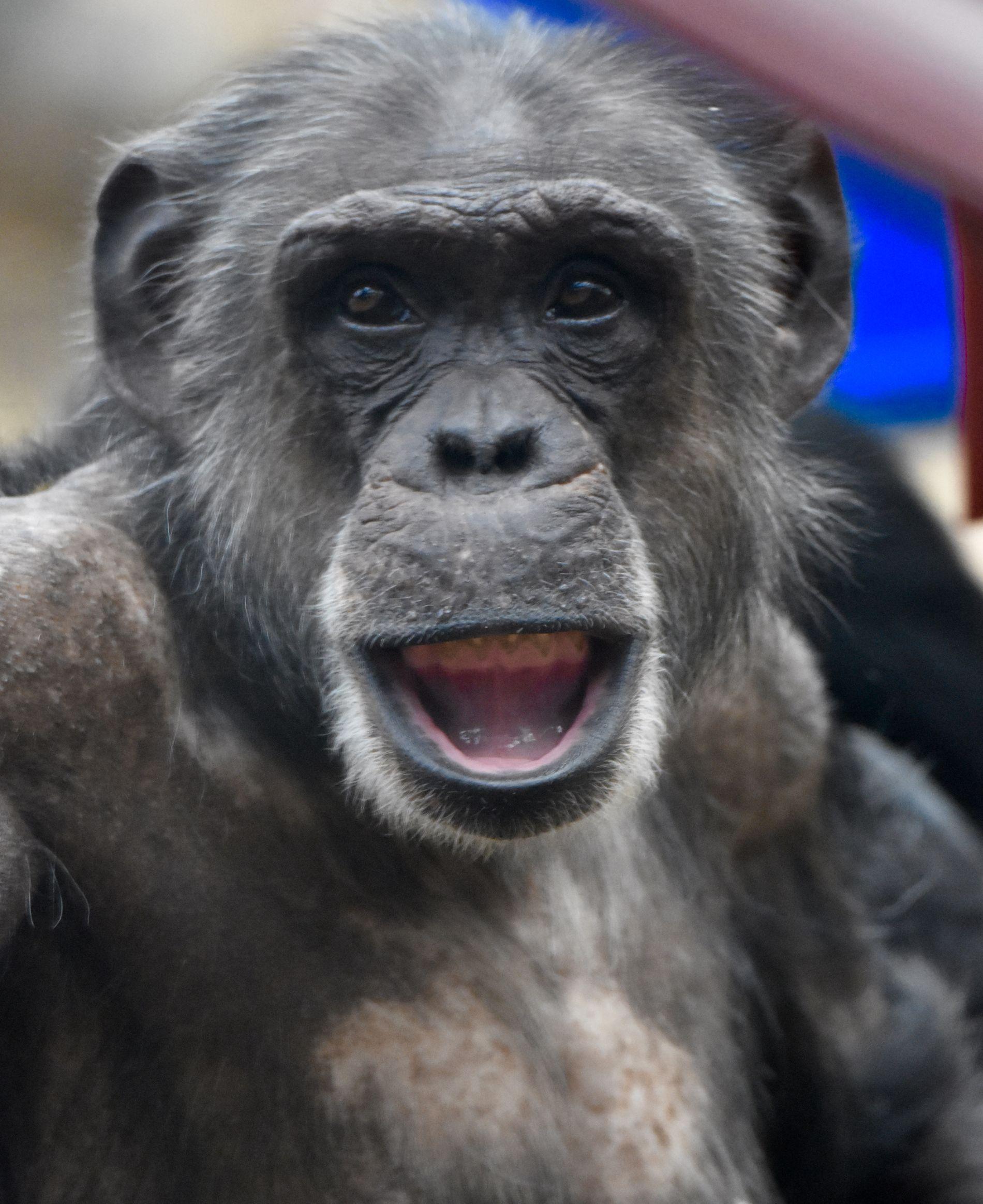 , Monkeys Medium Blueberry Freestyle Swim Diapers 18-28 lb